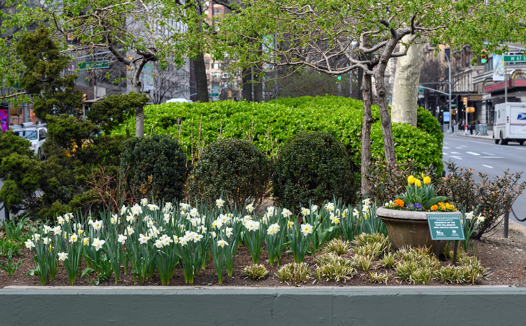 Daffodils planted in the Broadway Mall end bed at 66th Street with shrubs and a colorful urn.