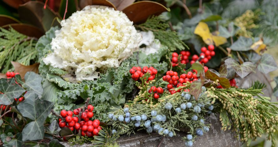 Close-up of a winter display in a Broadway Mall urn featuring berries and cabbage